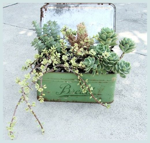 vintage containers and succulents. Add drainage holes and plant in a good cactus/succulent potting mix.