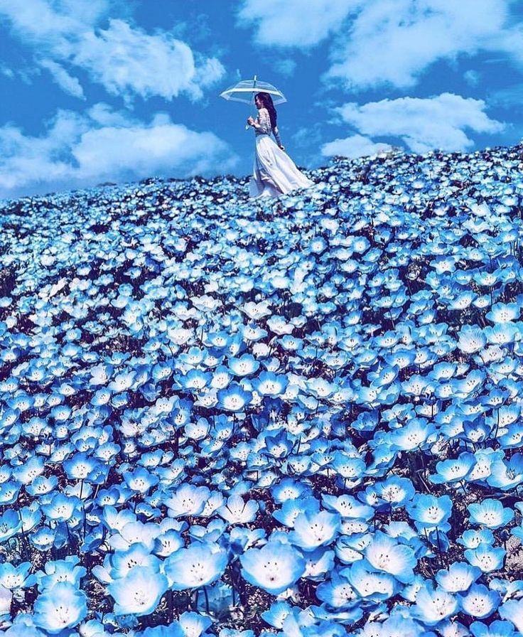 Go for a walk in a flower carpet💠 📷 Kristina…