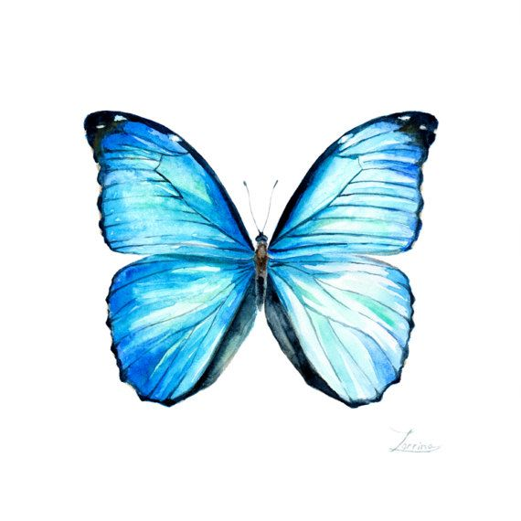 Watercolor blue butterfly Morpho menelaus. JPG downable and printable. Aquarelle realistic hand painting high resolution digital file by ZorrinaArt