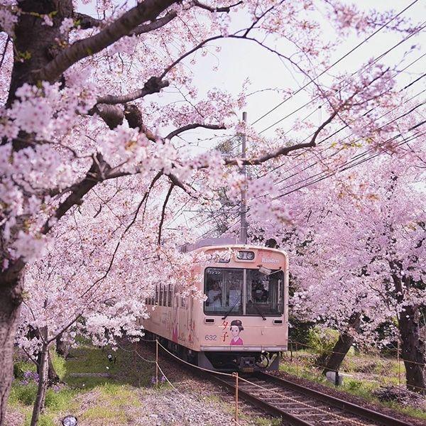Beautiful Photos Capture The Magical Beginnings Of Japan S Cherry Blossom Season Japanese Landscape Sakura Tree Japan Travel