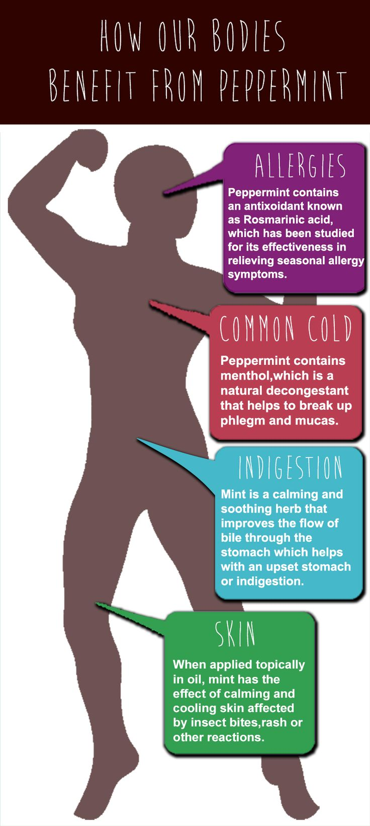 How our bodies benefit from Peppermint.