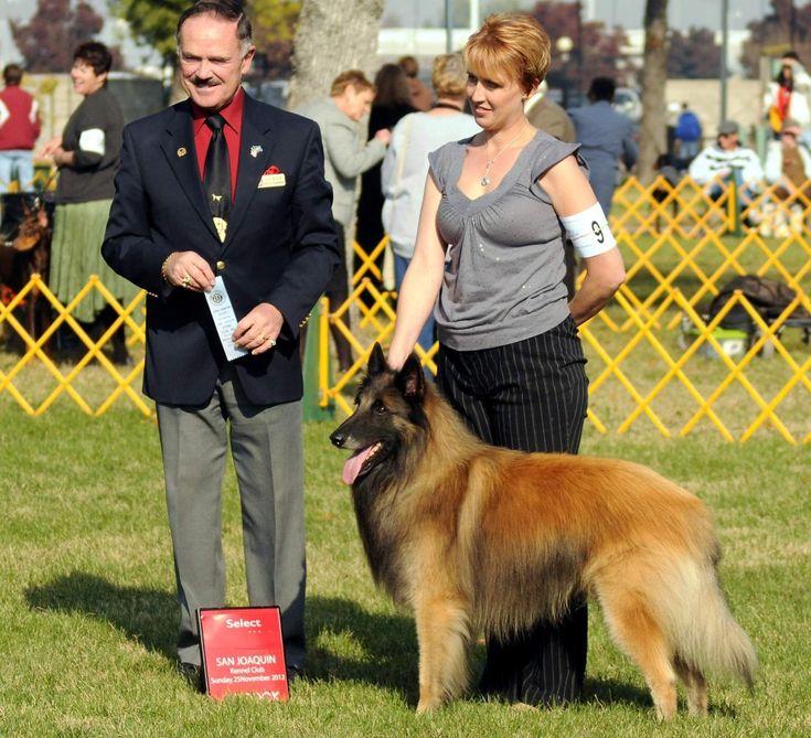 Dog list image by velizara on Belgian Shepherd Tervuren ...