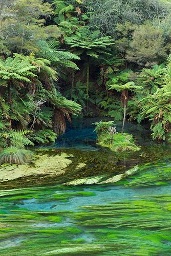 The Blue Spring (source of around 60% of New Zealand's bottled water), Waihou River, Putaruru, New Zealand | Simon East via Flickr
