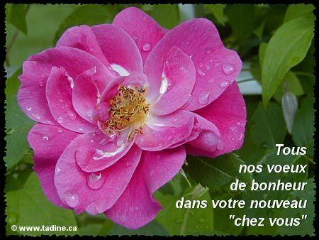 Cartes virtuelles fleuries du Jardin de Tadine