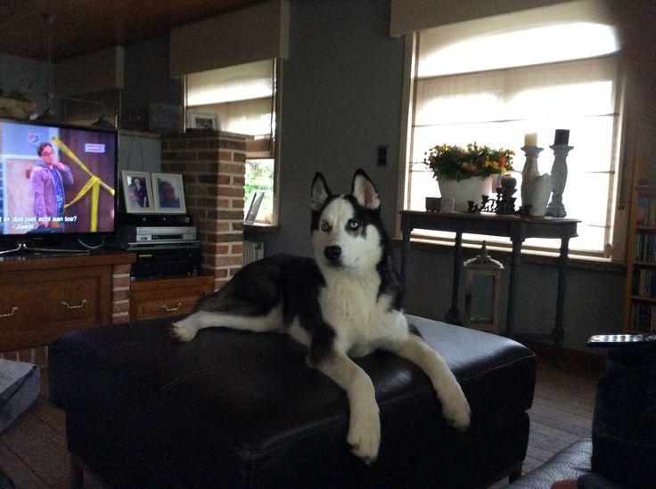 Husky onyx 5 maand oud !