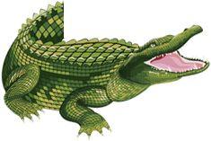 Krokodille Zoo | Hver dag, lidt mere bid!