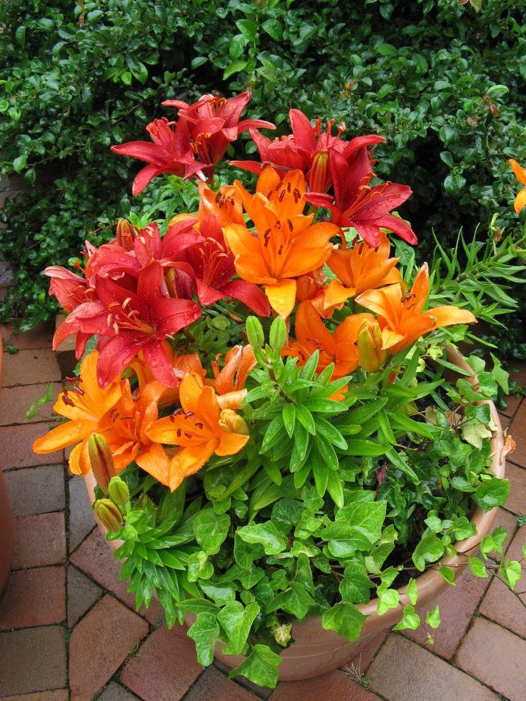 Nice Gardening In Pots #1: 465981aec95804f65fb6cb3a238f2f78--garden-pots-garden-ideas.jpg
