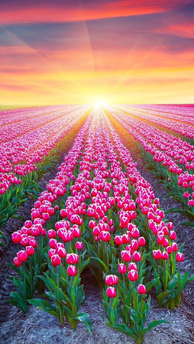 Nature wallpaper iPhone flowers Fotografía de naturaleza