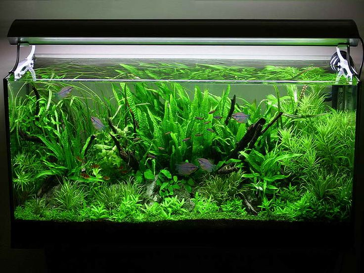 Asian jungle aquarium decoration themes planted aquarium for Aquarium decoration set