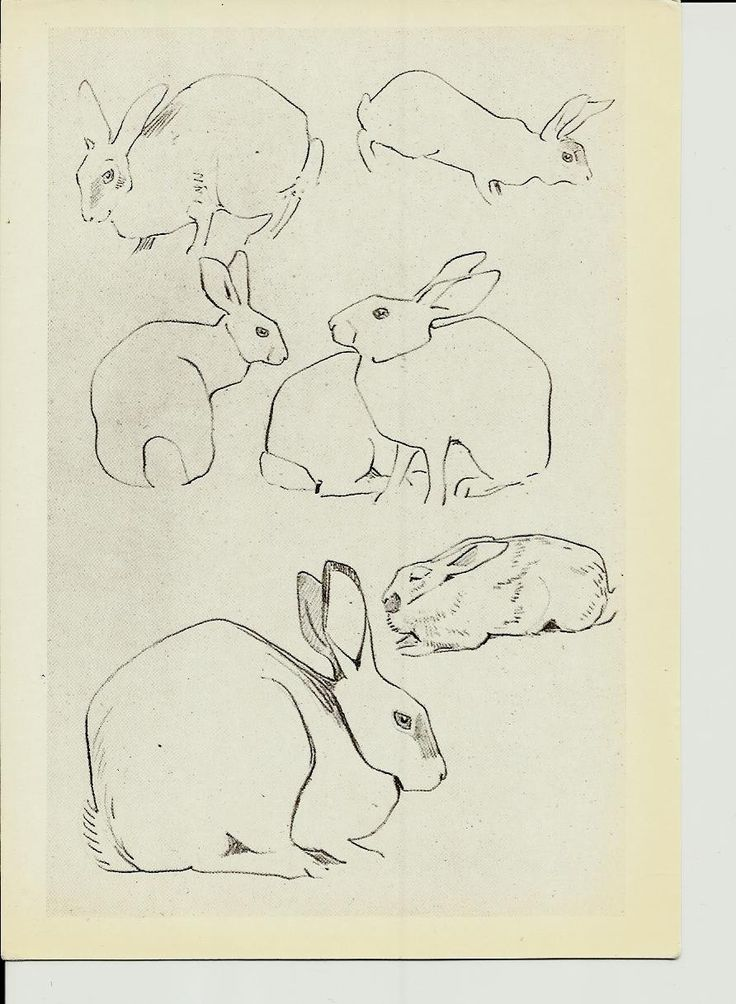 Rabbits, Drawing Animal by Vatagin, Vintage Russian Postcard unused 1978 by LucyMarket on Etsy