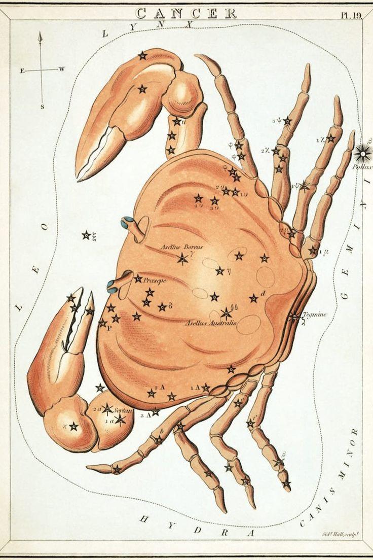 Conoce los mitos detrás de cada signo zodiacal y su constelación. Constellations, Constellation Map, Vintage Prints, Vintage Art, Tarot, Cancer Horoscope, Cancer Zodiac Art, Astrology Zodiac, Astrology Signs