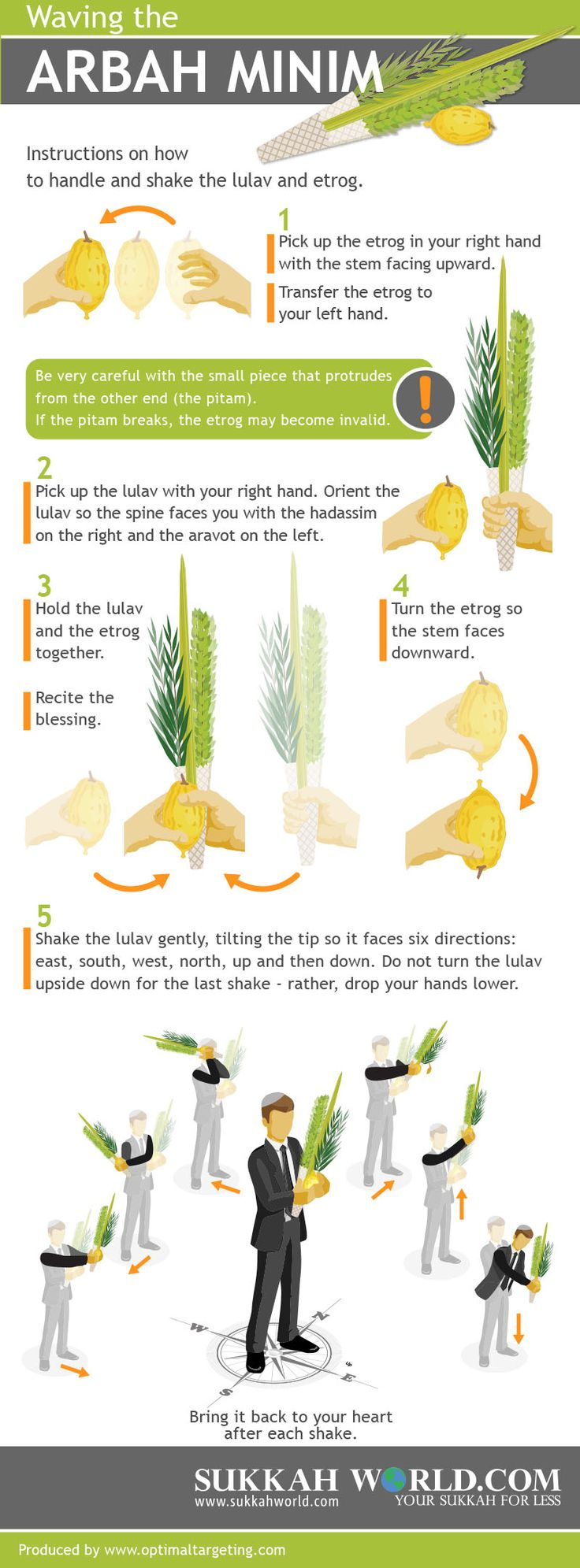 Waving The Arbah Minim an Infographic by: www.sukkahworld.com
