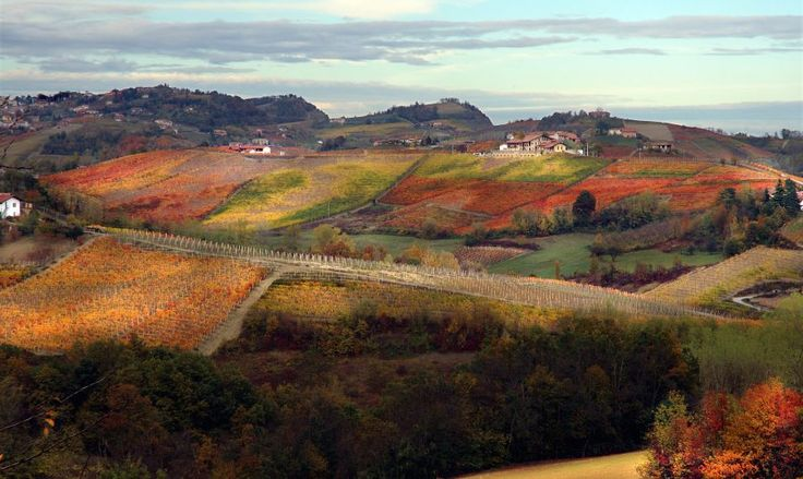 WinePorn: Fall Vineyards of Barolo at Azienda Pecchenino, Piedmont, Italy