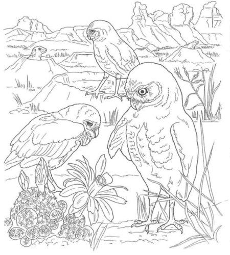 Coloring Pages Of An Owl In The Desert