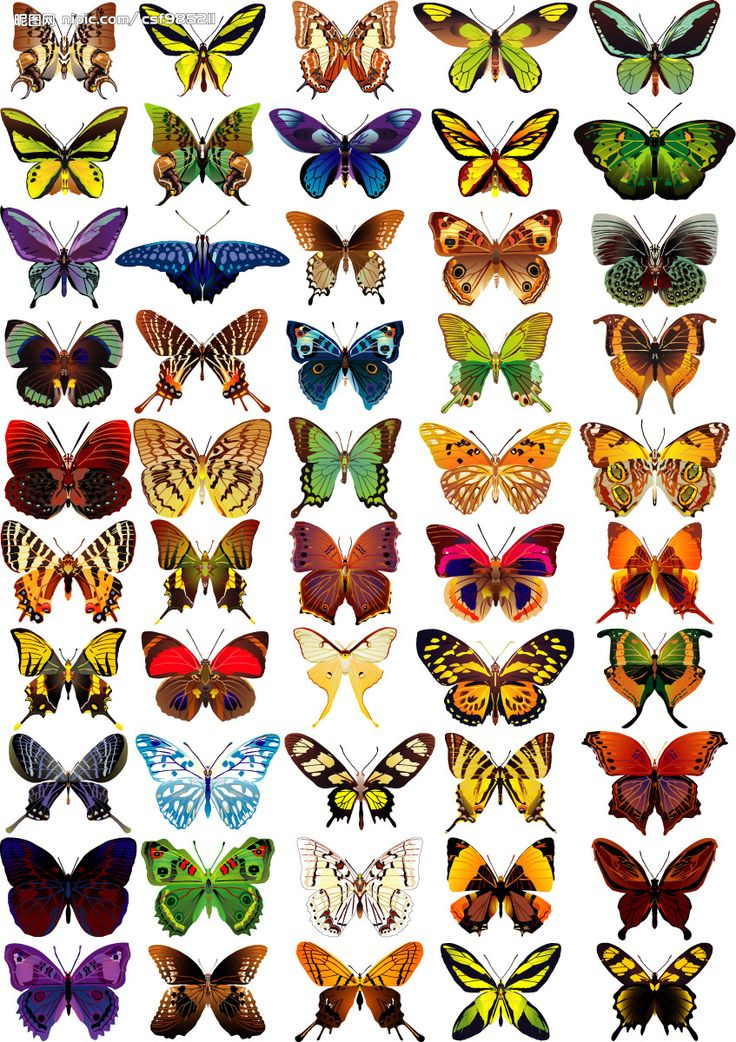 """Property 9: """"CONTRAST is the way that a center is strengthened by the sharpness of the distinction between its character and the character of surrounding centers"""" (Christopher Alexander). Example Butterflies."""