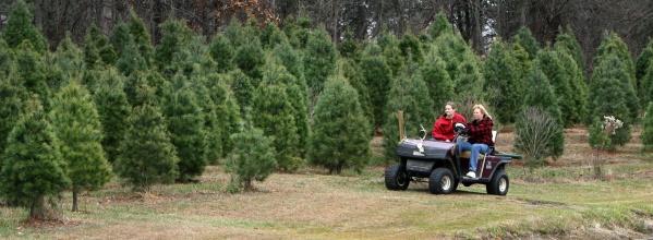 crosley christmas tree farm memories pinterest christmas tree farm - Starting A Christmas Tree Farm