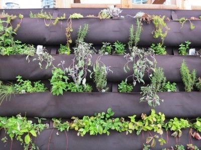 How To Make A Herb Wall Garden | #Horticool #ApartmentGardening #Gardening