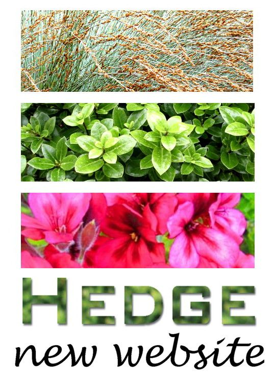 Dear pinners ~ we have launched a new mobile friendly website, with lots of new photos of our garden designs & plant nursery. Existing pins should all link to the new site. Enjoy ~ from Rach HEDGE
