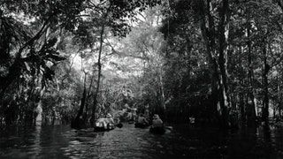 American Experience: Into the Amazon (2017) - The remarkable story of the journey taken by President Theodore Roosevelt and legendary Brazilian explorer Cândido Rondon into an unexplored tributary of the Amazon (2 Hours) : Documentaries