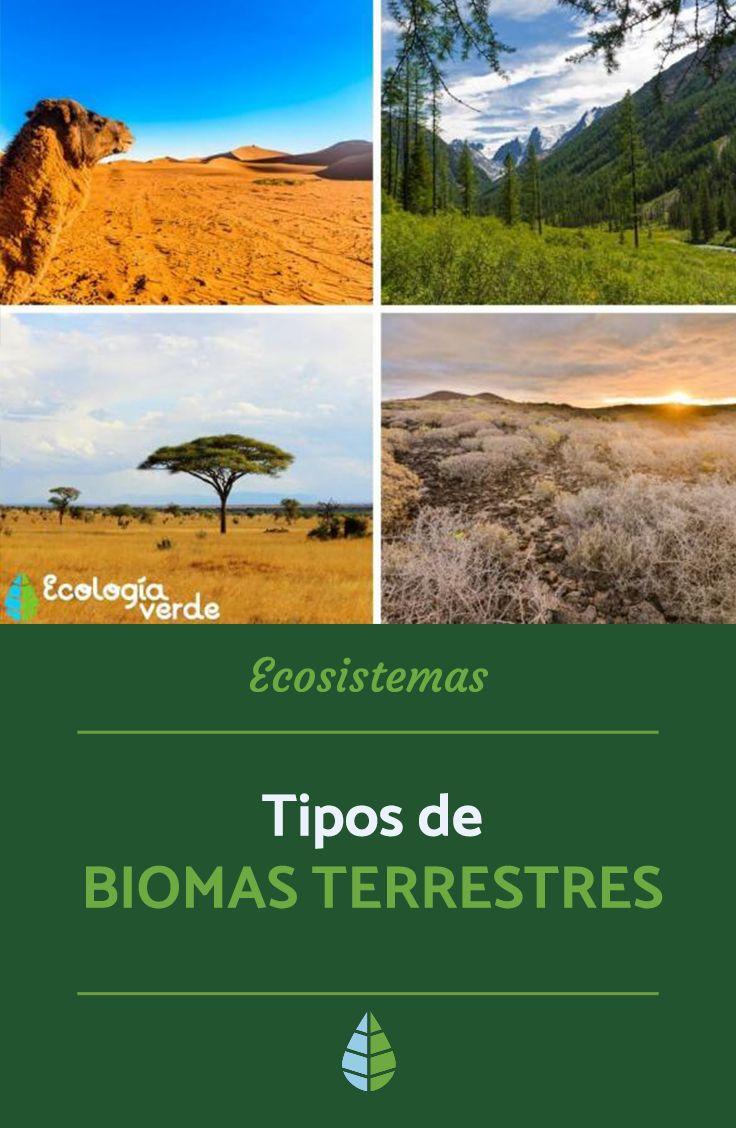 8 Tipos De Biomas Terrestres Características Ejemplos Y Fotos Bioma Terrestre Biomas Ecosistemas