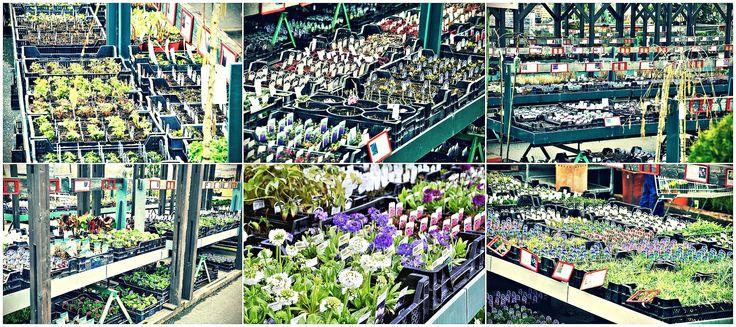 Víte, že...?  U STARKLa zahradníka můžete vybírat z 250 druhů trvalek?