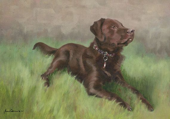 #Labrador Oil Print - A4 - Olive, Chocolate Labrador, 5% of profits to Cornwall Air Ambulance Trust #dogs #art