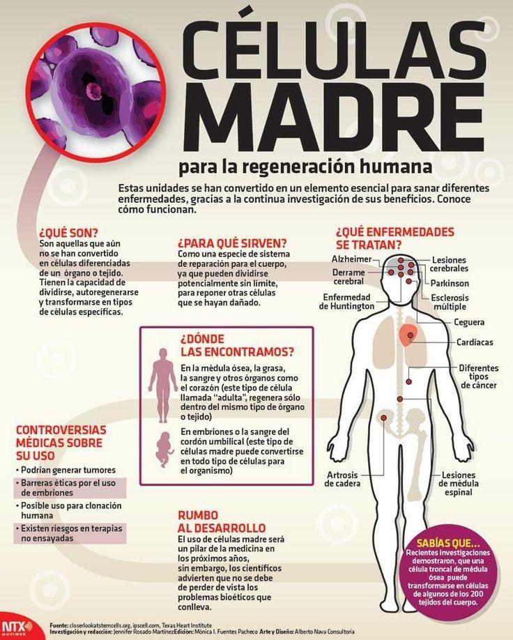 Células madre para la regeneración humana - Investigación y Desarrollo