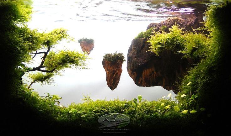 aquascape hobbit - Google Search   Aquascaping   Pinterest   Hobbit and Search