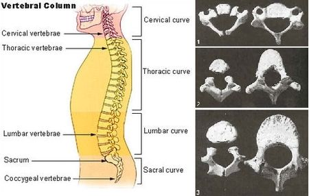 Car Seats And Spine Development