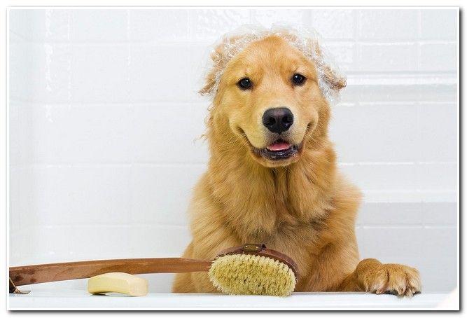 http://www.bathroomsdeco.com/oatmeal-bath-for-dogs/