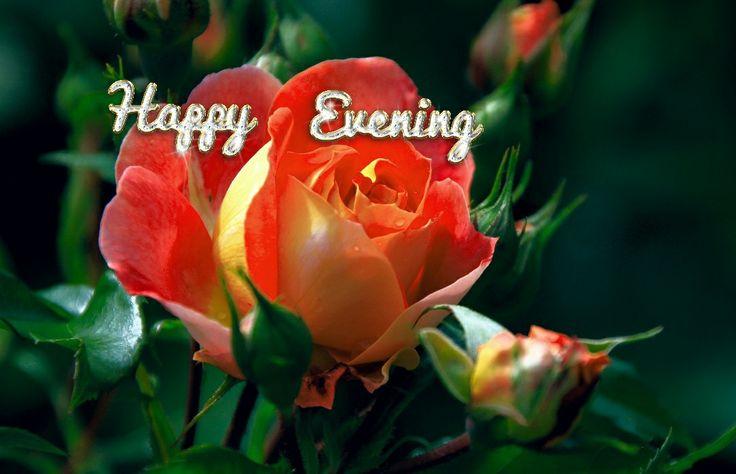 Happy Evening
