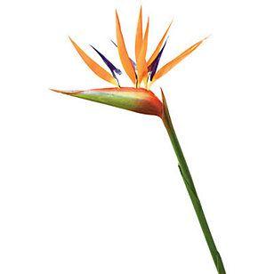Floracenter Flor Ave del paraíso 91 cm Me encanta !!