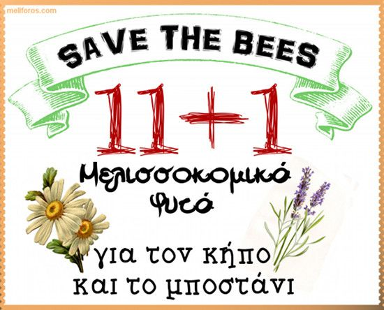 11+1 Μελισσοκομικά Φυτά για τον κήπο και το μποστάνι!
