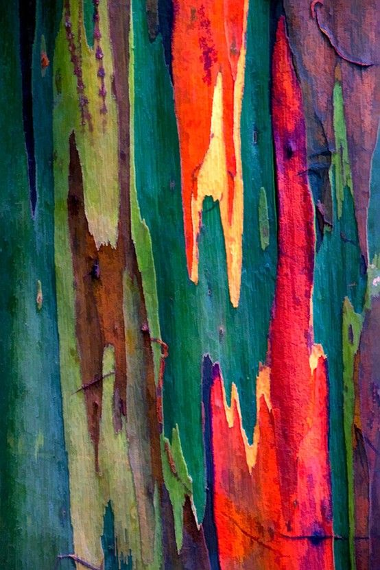 Sorry artist of the world ... nature still wins. (ie: Rainbow Eucalyptus Tree Bark)