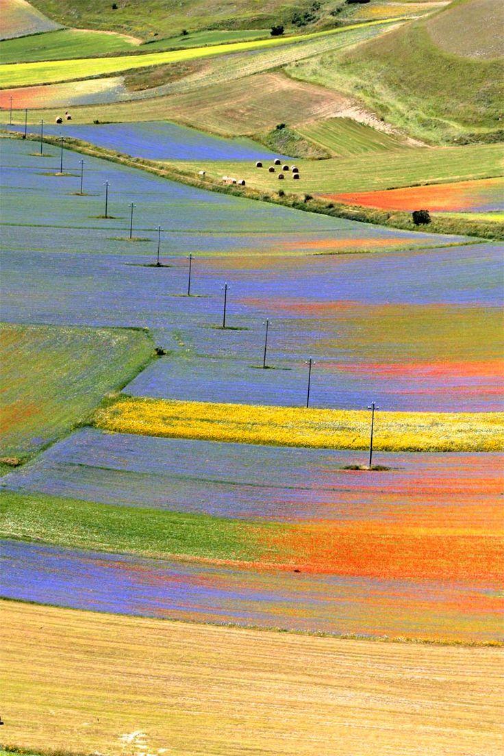 fioritura-castelluccio-02.jpg (800×1200)