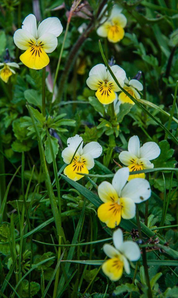 Flower by Manuela Vignato on 500px