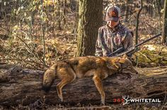 A Beginner's Guide To Calling Coyotes #hunting #coyotehunting #predatorhunting #coyotes #callingcoyotes #foxpro #duelcalls