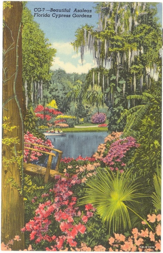 Vintage Florida Linen Postcard Cypress Gardens Beautiful Azaleas Flowers