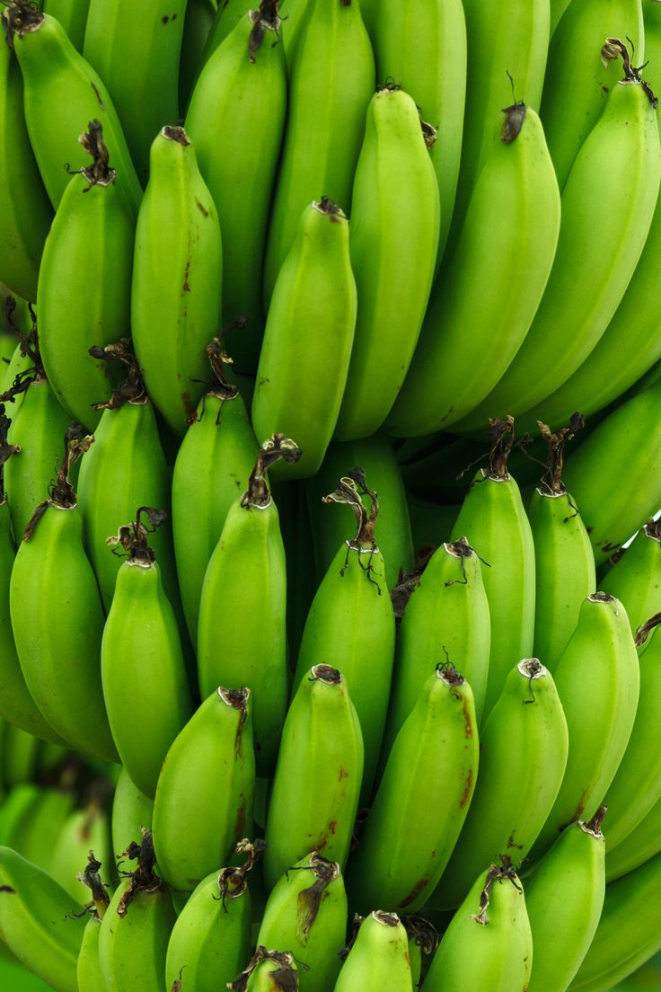 #7 These bananas are green showing how they are not yet ready to eat. In a way, I am very much like these bananas because I am still young, innocent, and unexperienced. Unlike Marji, I have not had to face war or any turmoil in my country, therefore I am still unexperienced. I consider myself innocent because I have not been a victim of anything that would force me to mature faster.