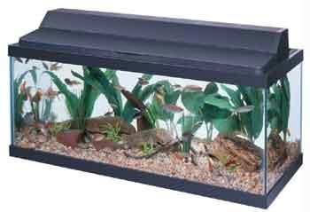 Shop All Glass Aquarium  Fluorescent Deluxe Black Hood - 30 Inch online at lowest price in india and purchase various collections of Fish Supplies in All Glass Aquarium brand at grabmore.in the best online shopping store in india