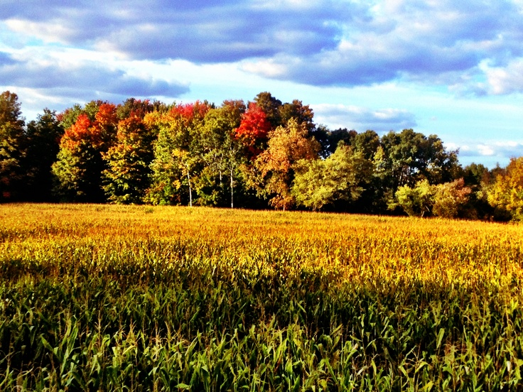 Autumn color change from Strom's Farm, Guelph, Ontario, Canada