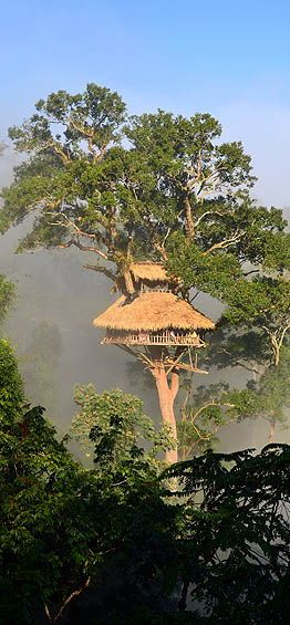 The Gibbon Experience - living in tree tops in Laos, traveling by zipline, dream vacation.