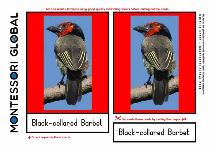 TYPES OF BIRDS $5.20 Three part nomenclature cards to teach the names of the types of birds that can be seen in Africa. Designed to support the Montessori curriculum but is suitable for home school and traditional environments. This is a set of 26 cards.