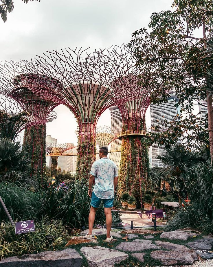 4660513cfdea375a81815340f15b8461 - Guide To Gardens By The Bay