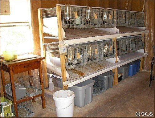 How to stack rabbit cages so they don't poop on each other