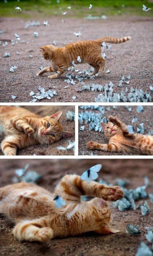 Basking In Butterflies