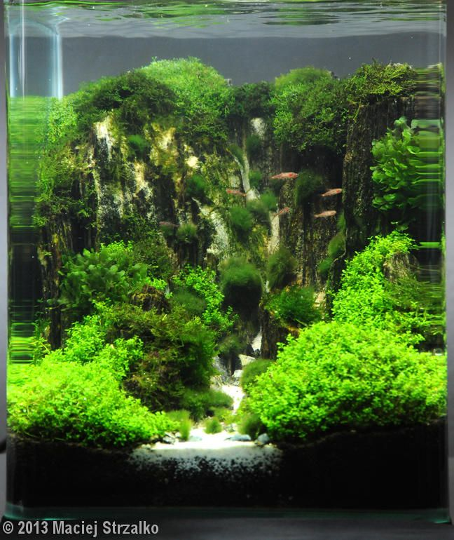 Freshwater Aquascape: 894 Best Images About Aquarium