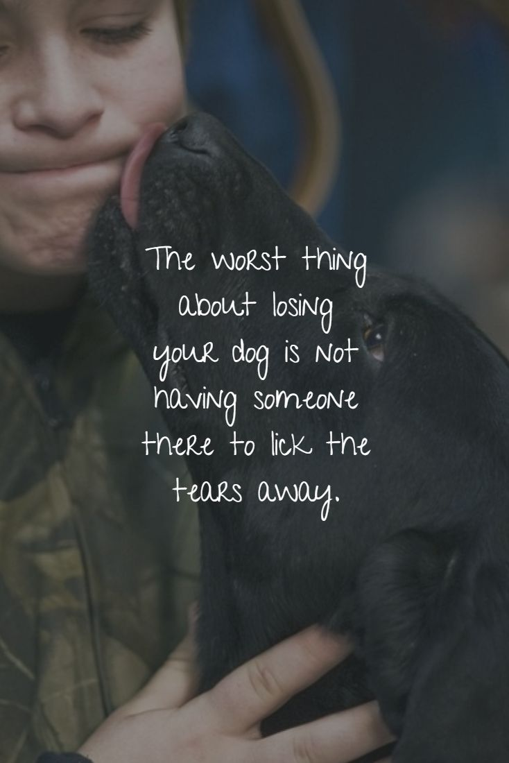 The worst thing about losing your dog is not having someone there to lick the tears away.