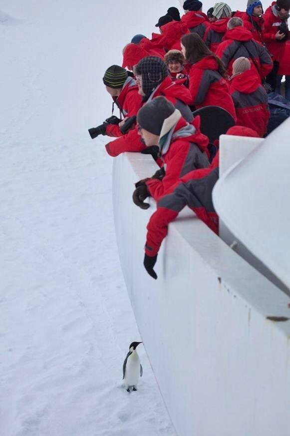 Silver Explorer al Polo Sud