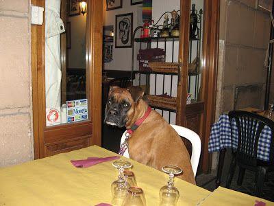 Boxer - Blipadee: Animals in Venice!
